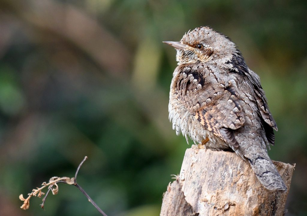 birding tour in himachal